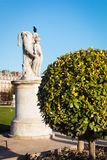 Árbol en el jardín del Tuileries Fotografía de archivo libre de regalías
