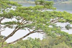 Árbol en el lado del lago Fotografía de archivo