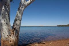 Árbol en el lago Fotos de archivo