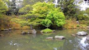 Árbol en el lago Imágenes de archivo libres de regalías