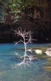Árbol en el lago Fotografía de archivo libre de regalías