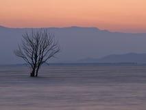Árbol en el lago en el amanecer Fotografía de archivo libre de regalías