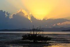 Árbol en el mar Fotografía de archivo libre de regalías
