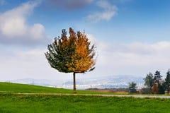 Árbol en el medio de un campo Fotos de archivo