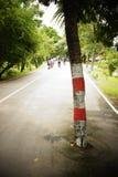 Árbol en el medio del camino Imagen de archivo libre de regalías