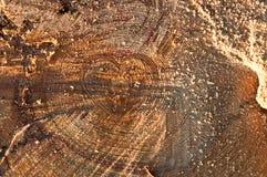 Árbol en el medio del imágenes seccionadas transversalmente del árbol del corazón Imagen de archivo libre de regalías
