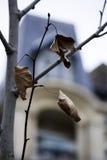 Árbol en el monceau París del parc Foto de archivo