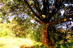 Árbol en el otoño Fotografía de archivo