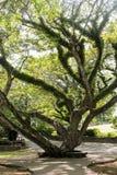 Árbol en el parque Imagen de archivo libre de regalías