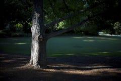 Árbol en el parque Fotografía de archivo libre de regalías