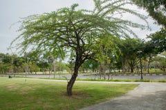 Árbol en el parque Imagen de archivo