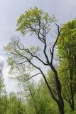 Árbol en el parque cerca del río de Warta imágenes de archivo libres de regalías