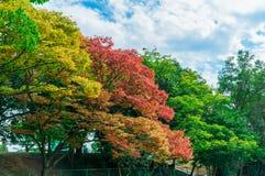 Árbol en el parque de Ohori Imagen de archivo