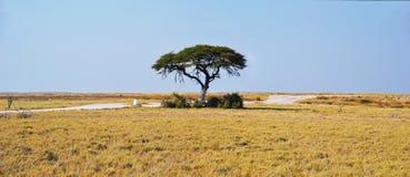 Árbol en el parque nacional de Etosha Fotografía de archivo libre de regalías