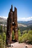 Árbol en el parque nacional de Yosemite imágenes de archivo libres de regalías
