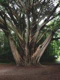 Árbol en el parque nacional kerry de Killarney irelan Fotografía de archivo