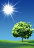 Árbol en el prado imágenes de archivo libres de regalías