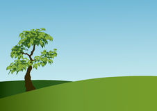 Árbol en el prado Fotografía de archivo libre de regalías