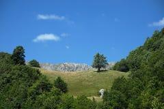 Árbol en el prado del claro, Montenegro imagenes de archivo