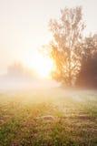 Árbol en el prado en abajo Fotografía de archivo libre de regalías