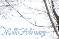 Árbol en el primer de la nieve Invierno y nieve imágenes de archivo libres de regalías