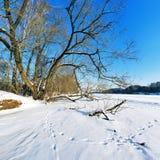 Árbol en el río congelado Foto de archivo libre de regalías