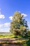 Árbol en el riverbank imagen de archivo