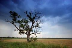 Árbol en el rural fotografía de archivo