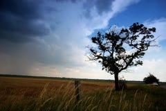 Árbol en el rural foto de archivo