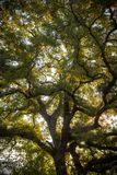 Árbol en el sol Imagen de archivo libre de regalías