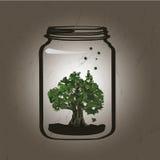 Árbol en el tarro Fotografía de archivo libre de regalías