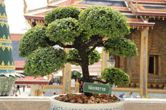 Árbol en el templo imagenes de archivo