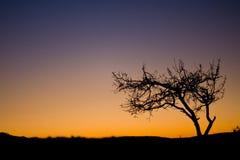 Árbol en el tiempo del amanecer Imágenes de archivo libres de regalías