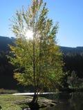 Árbol en el Tirol, Austria fotografía de archivo