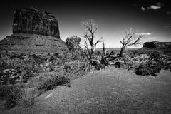 Árbol en el valle B&W del monumento Imagenes de archivo