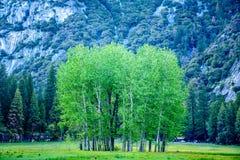 Árbol en el valle de Yosemite Fotografía de archivo