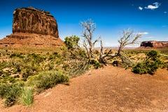 Árbol en el valle del monumento Imagen de archivo libre de regalías