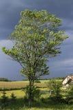 Árbol en el viento Fotografía de archivo libre de regalías