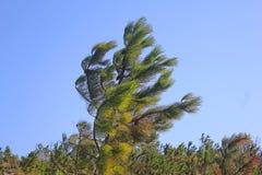 Árbol en el viento Foto de archivo