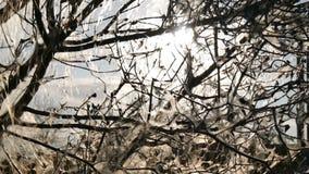 Árbol en el web primer almacen de metraje de vídeo