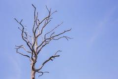 Árbol en el cielo azul Fotografía de archivo libre de regalías