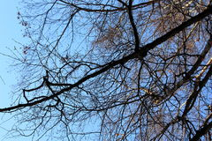 Árbol en fondo del cielo azul Fotos de archivo