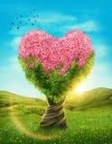 Árbol en forma de corazón Imágenes de archivo libres de regalías