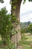 Árbol en Gillooly' granja de s Foto de archivo libre de regalías