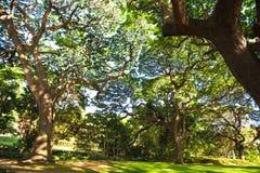 Árbol en Hawaii Imagenes de archivo
