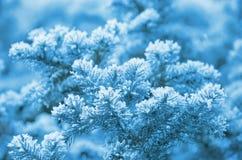 Árbol en helada Foto de archivo libre de regalías