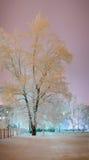 Árbol en helada y nieve fotografía de archivo libre de regalías