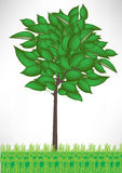 Árbol en hierba Imagenes de archivo