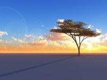 Árbol en horizonte de la puesta del sol Fotos de archivo