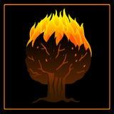 Árbol en icono del fuego Foto de archivo libre de regalías